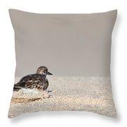 Contemplative Sandpiper Throw Pillow