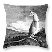 Cook: Kangaroo, 1773 Throw Pillow