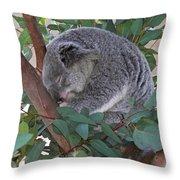 Cooladi Throw Pillow