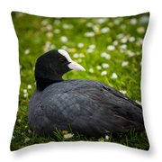 Coot Throw Pillow