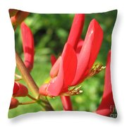 Coral Bean Tree Throw Pillow