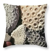 Coral Cobbles On Beach Of Bonaire Throw Pillow