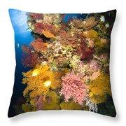 Coral Reef Seascape, Australia Throw Pillow