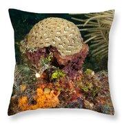 Coral Top Knot Throw Pillow