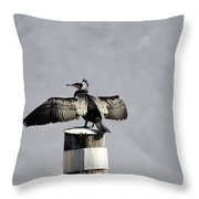 Cormorant Bird Throw Pillow