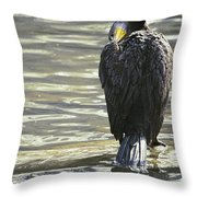 Cormorant Portrait In Shallow Water Throw Pillow