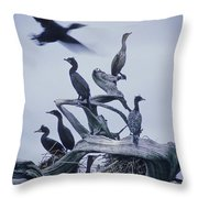 Cormorants Fly Above Driftwood, Grey Throw Pillow by Leanna Rathkelly