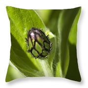 Cornflower Bud Throw Pillow