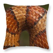 Cornsnake Elaphe Guttata Scale Pattern Throw Pillow