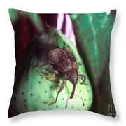 Cotton Boll Weevil Throw Pillow