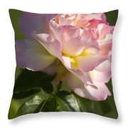 Cotton Candy Pink Peace Rose Throw Pillow