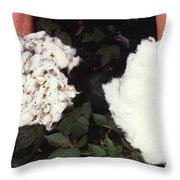 Cotton Comparison Throw Pillow