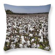 Cotton In Limestone County Throw Pillow