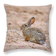 Cottontail Bunny Throw Pillow