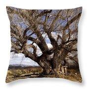 Cottonwood Tree At San Pedro House Throw Pillow
