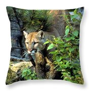 Cougar Coming Through Throw Pillow