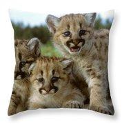 Cougar Cubs On A Rock Throw Pillow
