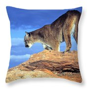 Cougar In The Sky Throw Pillow
