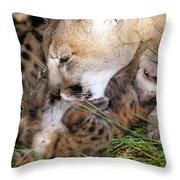 Cougar Mother Licks Kitten Throw Pillow