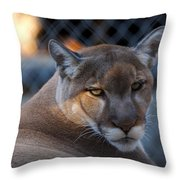 Cougar Portrait - Sad Eyes Throw Pillow