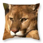 Cougar Relaxing. . . Throw Pillow