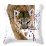 Cougar Stalks Through Snow Throw Pillow