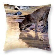 Cougar Stops For A Drink Throw Pillow