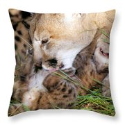 Couger Mom Cleans Kitten Throw Pillow