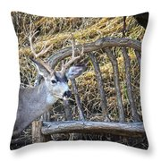 Country Buck Throw Pillow
