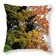Country Color 2 Throw Pillow