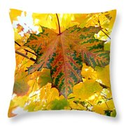 Country Color 21 Throw Pillow