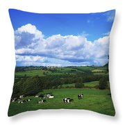 County Tipperary, Ireland, Dairy Cattle Throw Pillow