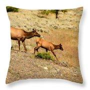 Cow And Calf Elk Throw Pillow