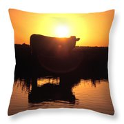 Cow At Sundown Throw Pillow by Picture Partners and Photo Researchers
