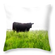 Cow Country Throw Pillow
