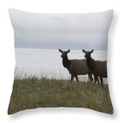 Cow Elk Pair On Beach Throw Pillow