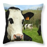 Cow Facing Camera Throw Pillow