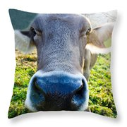 Cow In Backlight Throw Pillow
