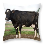 Cow With Johnes Disease Throw Pillow
