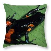 Cowans Mantella Throw Pillow
