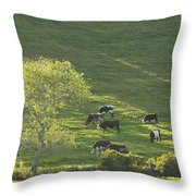 Cows On Hillside Summer In Maine Throw Pillow