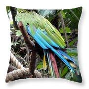 Coy Parrot Throw Pillow