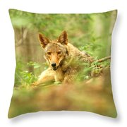 Coyote Caught Napping Throw Pillow