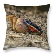 Crab Anyone Throw Pillow