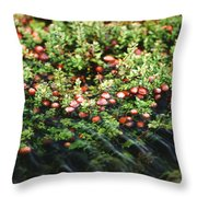 Cranberry Bog Throw Pillow