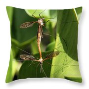 Crane Flies Mating Throw Pillow