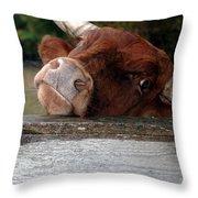Crazed Look In The Bulls Eye Throw Pillow