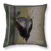 Creeping Tawny Owl Throw Pillow