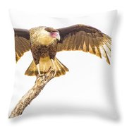 Crested Caracara Taking Off Throw Pillow