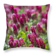 Crimson Clover In All Its Glory Throw Pillow